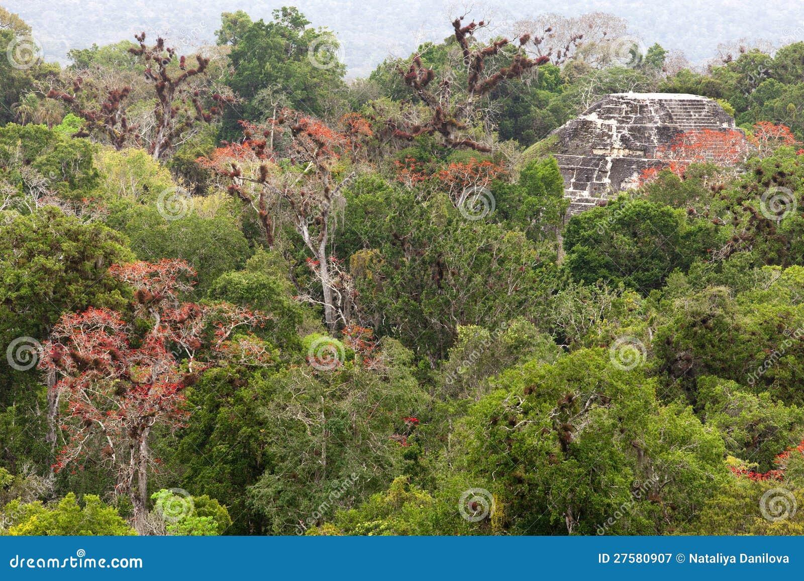 Майяские руины в джунглях Tikal