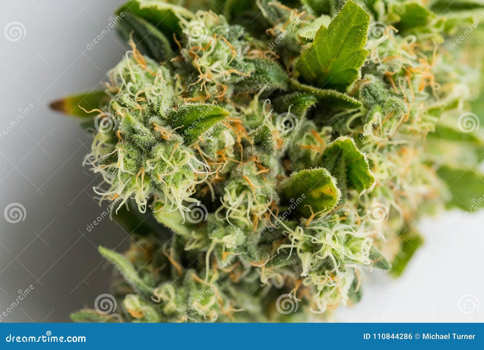 Пыль сделанная из конопли марихуана ответственность россия