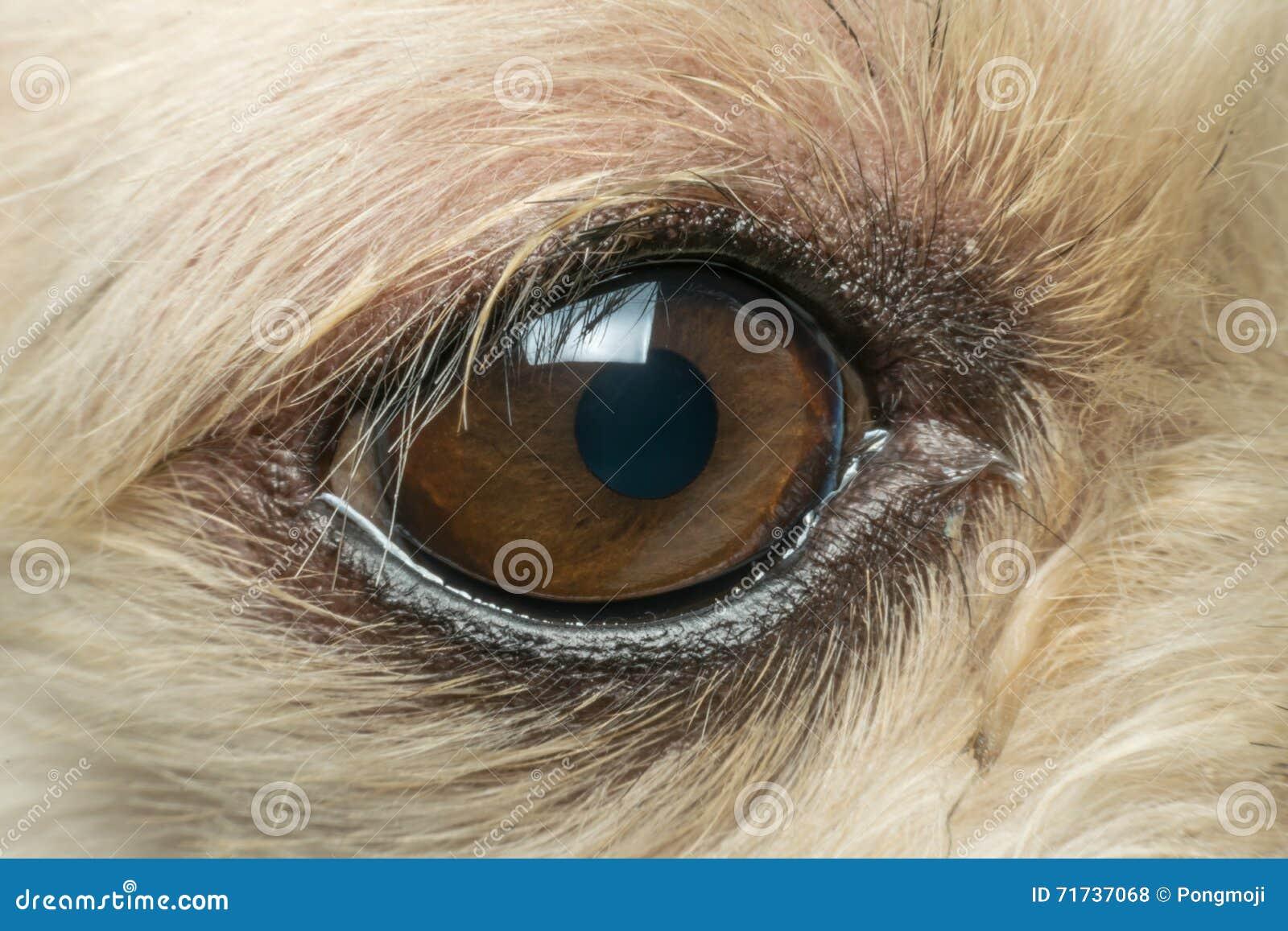 Макрос глаза собаки