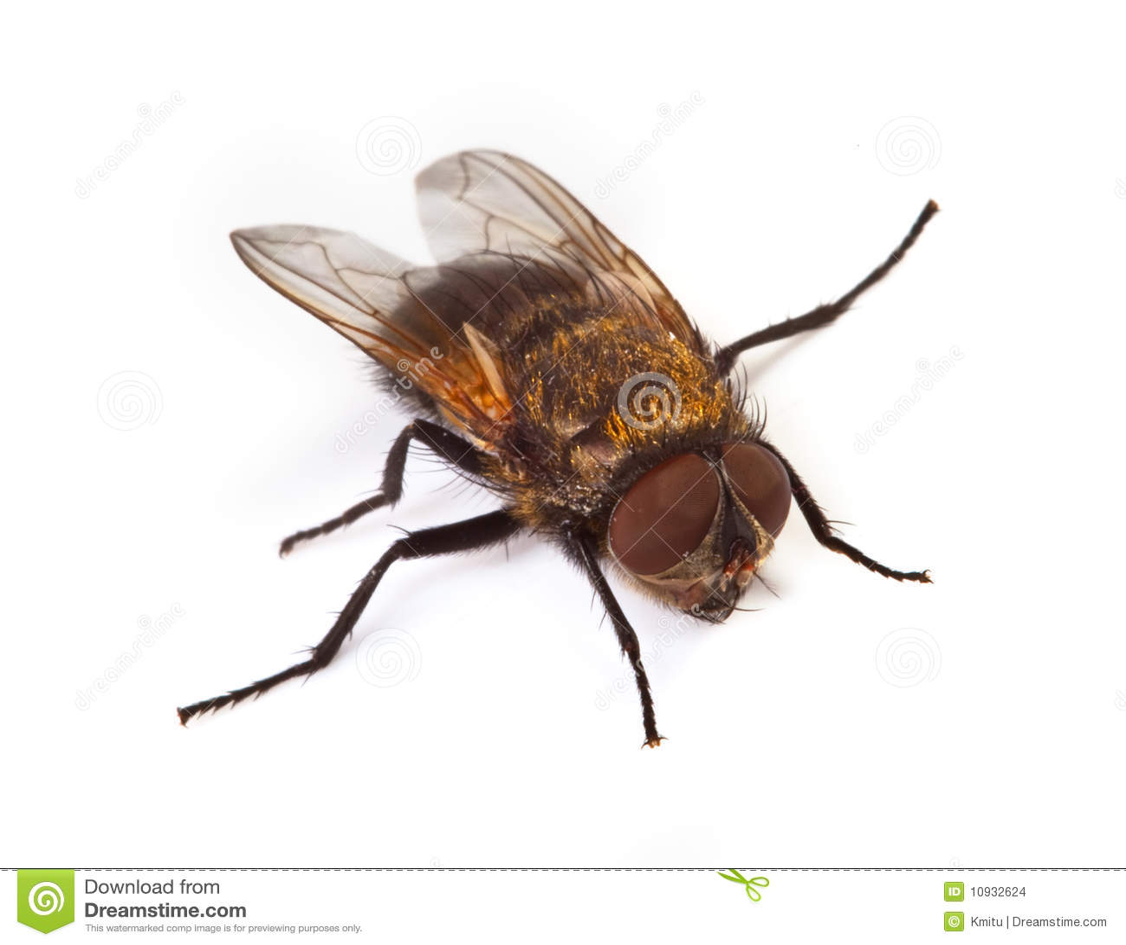 макрос мухы домашний