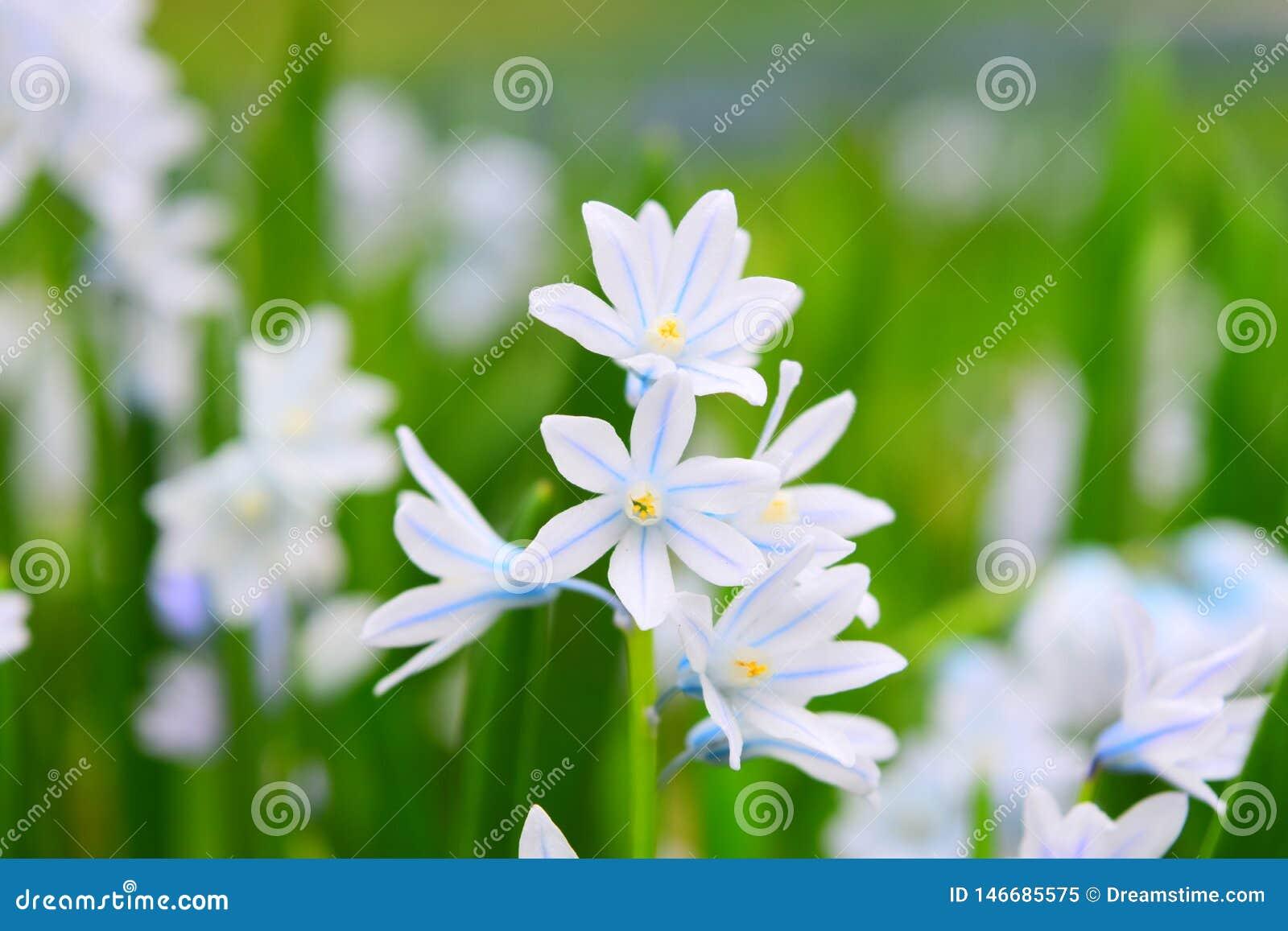 Макрос снятый крошечных белых цветков