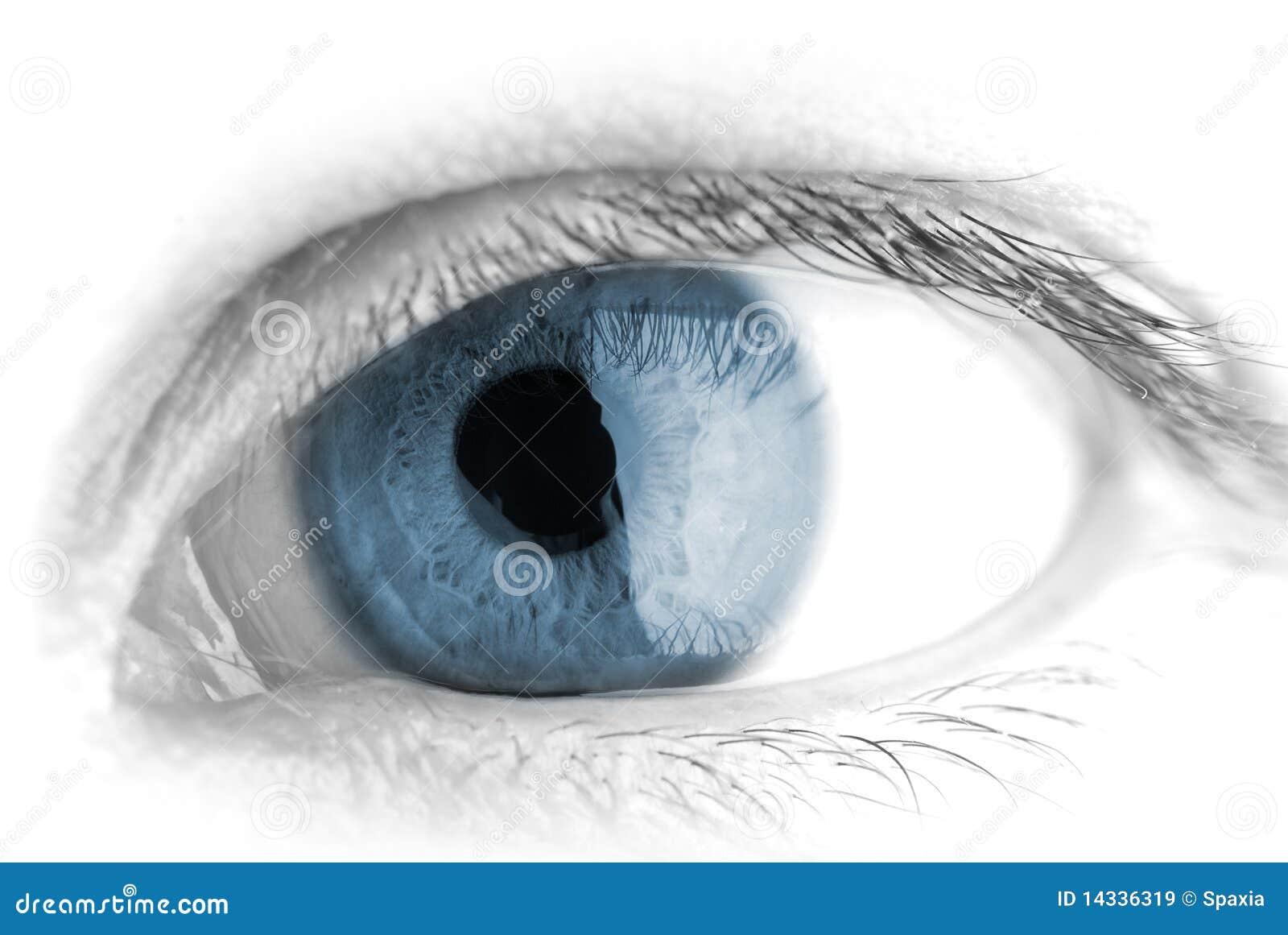 макрос человека глаза