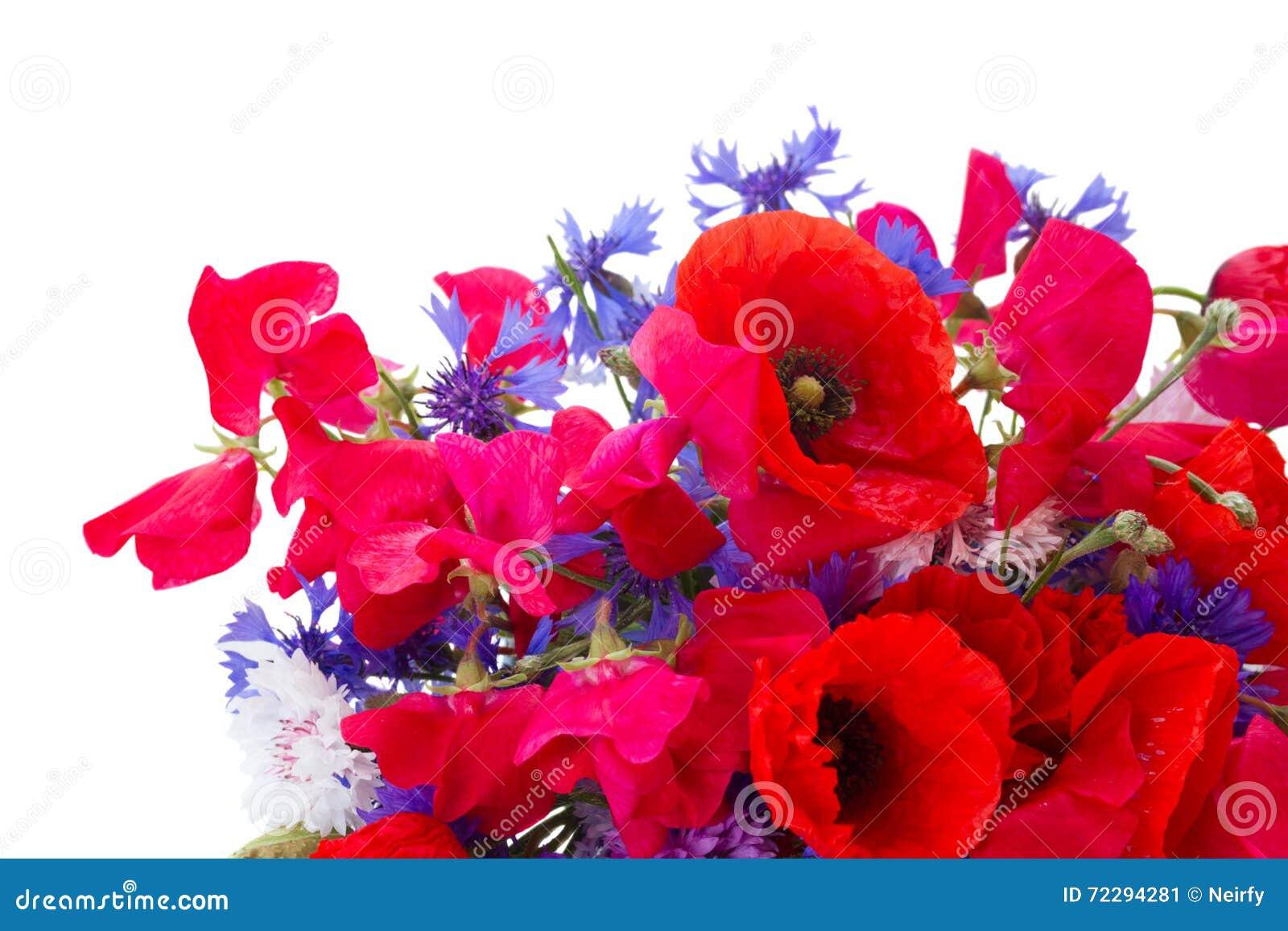Download Мак, сладостный горох и цветки мозоли Стоковое Изображение - изображение насчитывающей кровопролитное, головка: 72294281