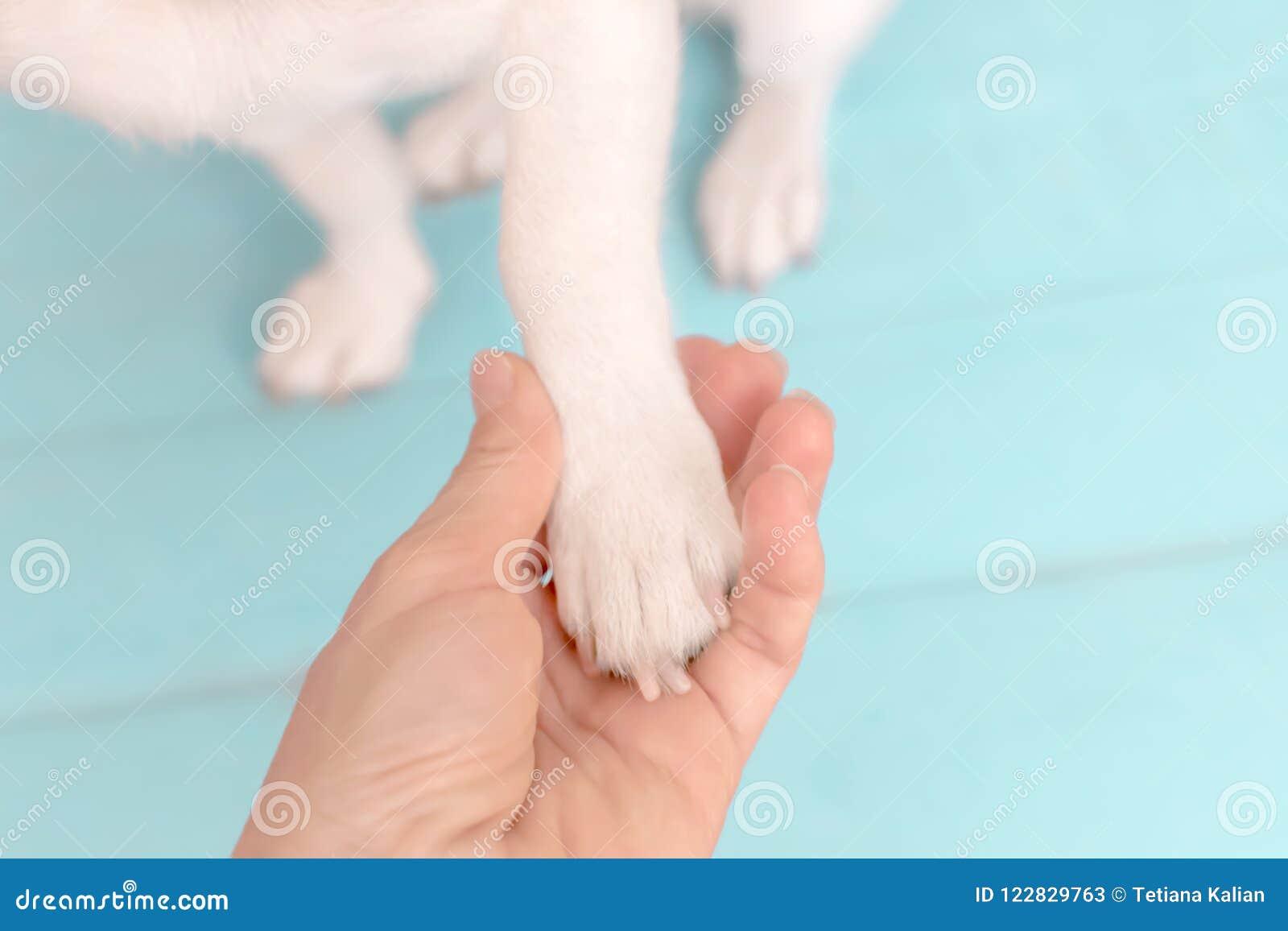 Малая собака дает лапку к предпринимателю Лапка любимчика в ладони ` s персоны Концепция приятельства между человеком и животным