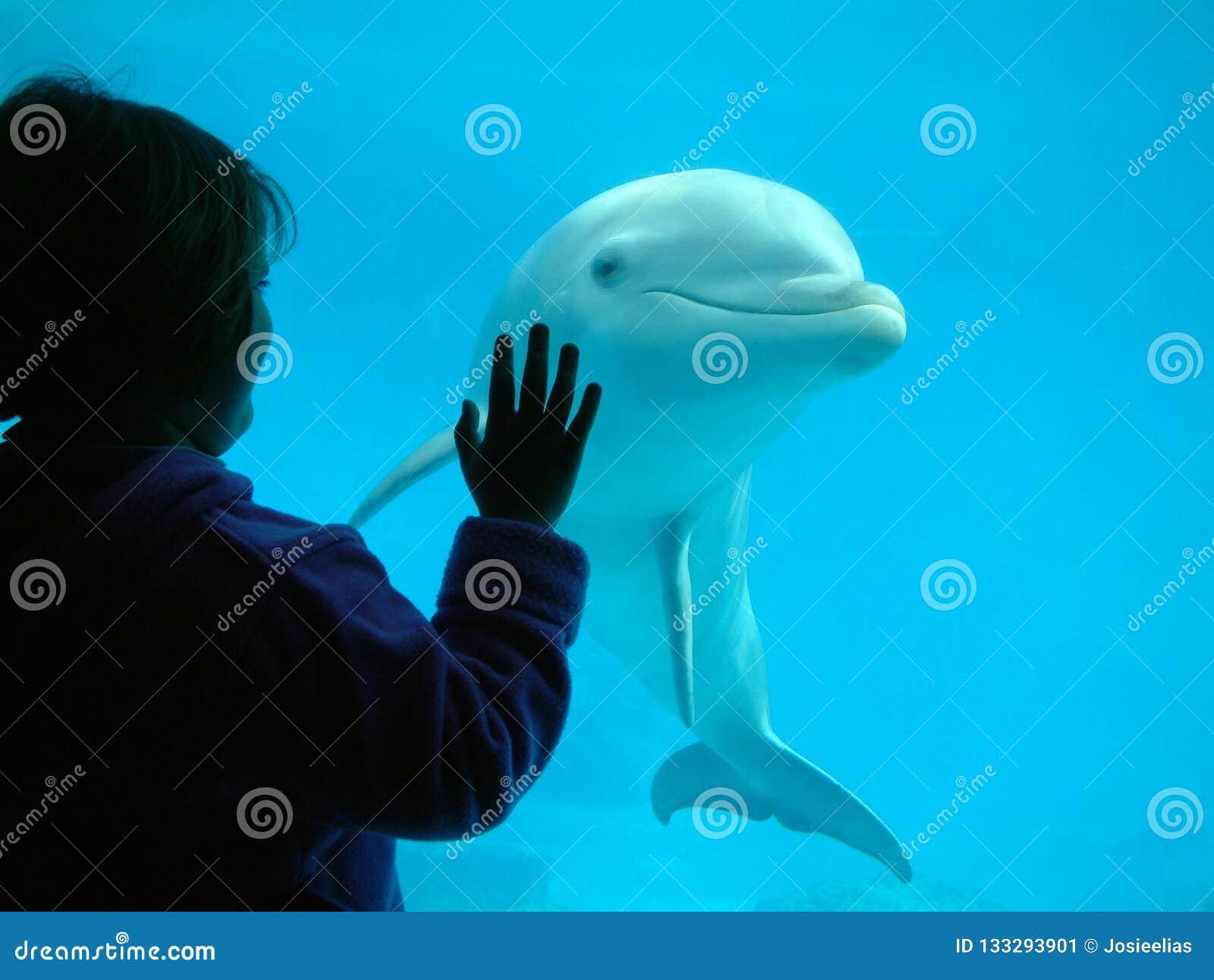 Маленькая девочка взаимодействуя с дельфином
