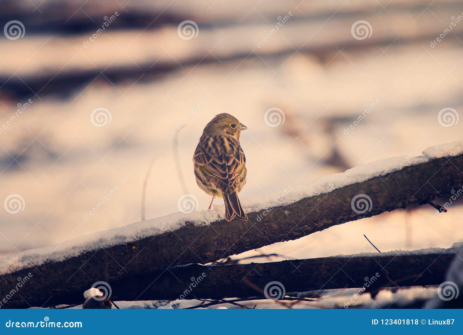 Маленькая птица