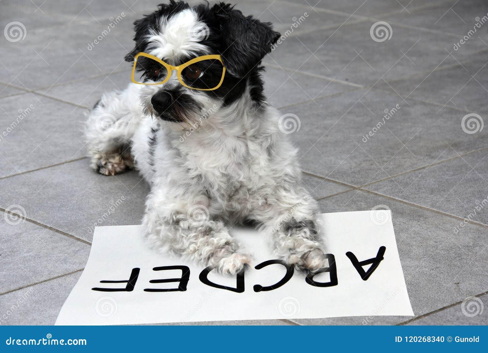Маленькая moggy собака учит прочитать