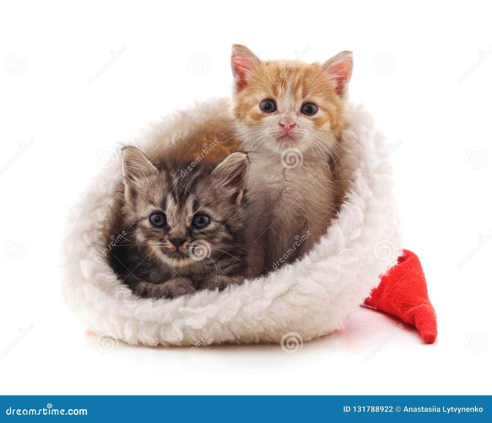 Маленькие котята в шляпе рождества