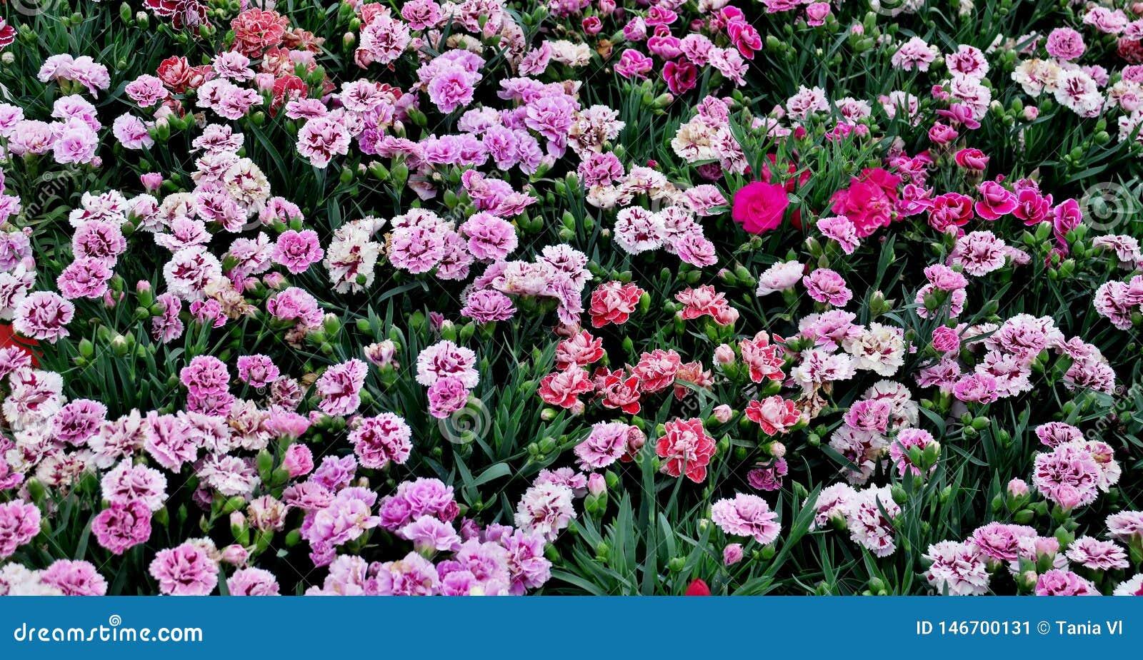 Маленькие красивые цветки других цветов закрывают вверх