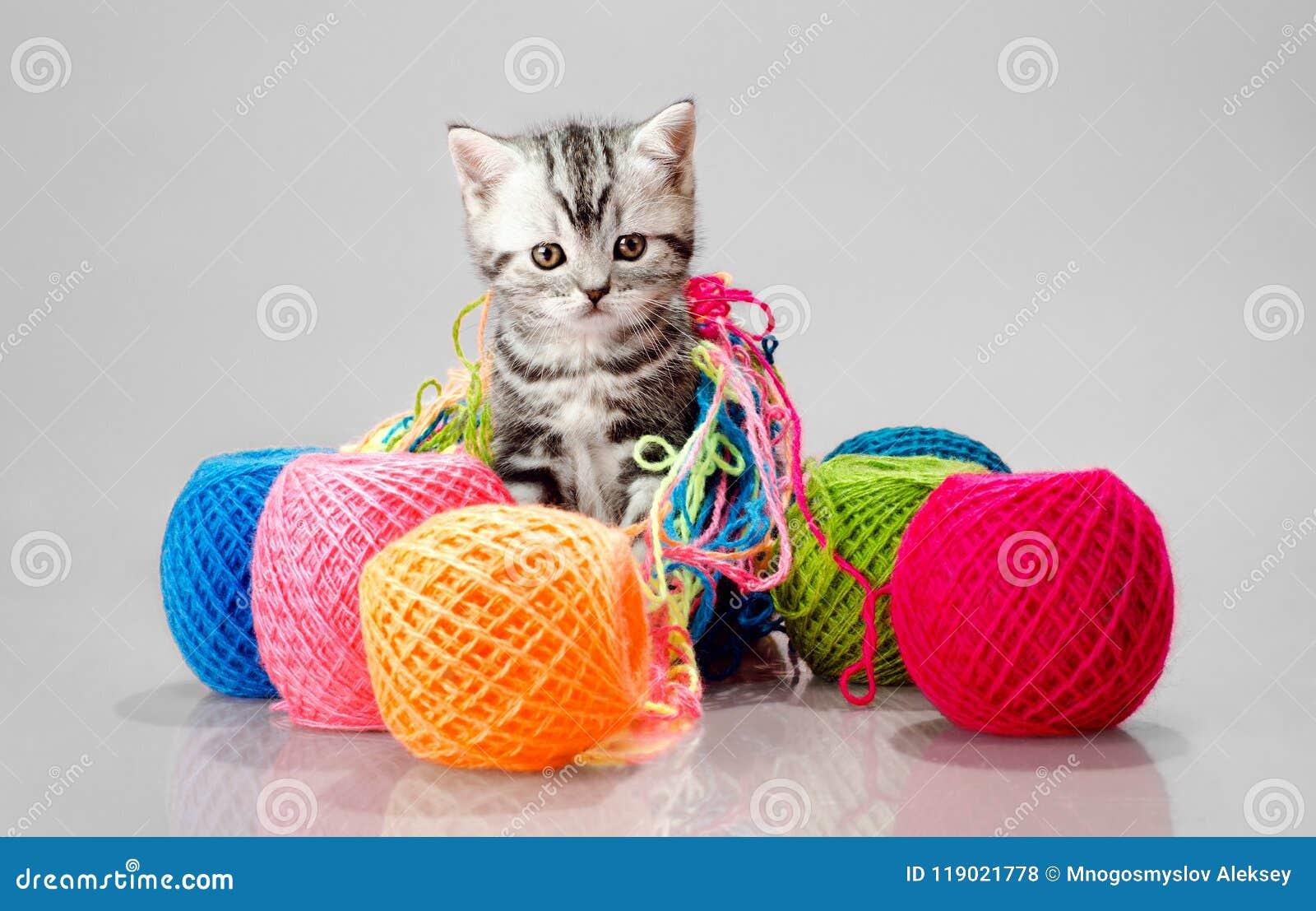Маленький котенок с много пестротканый клубок