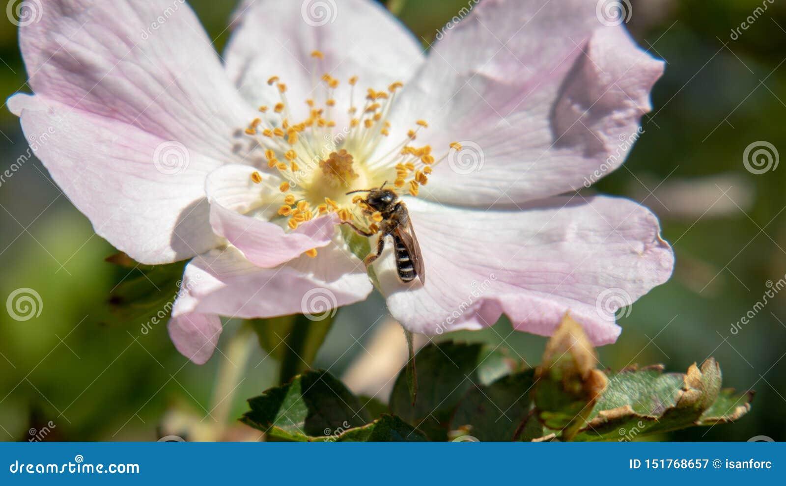 Маленькое насекомое есть в цветке