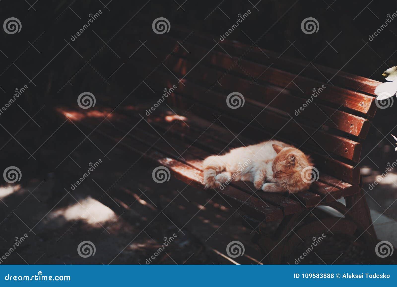 Малый красный кот на парке стенда публично