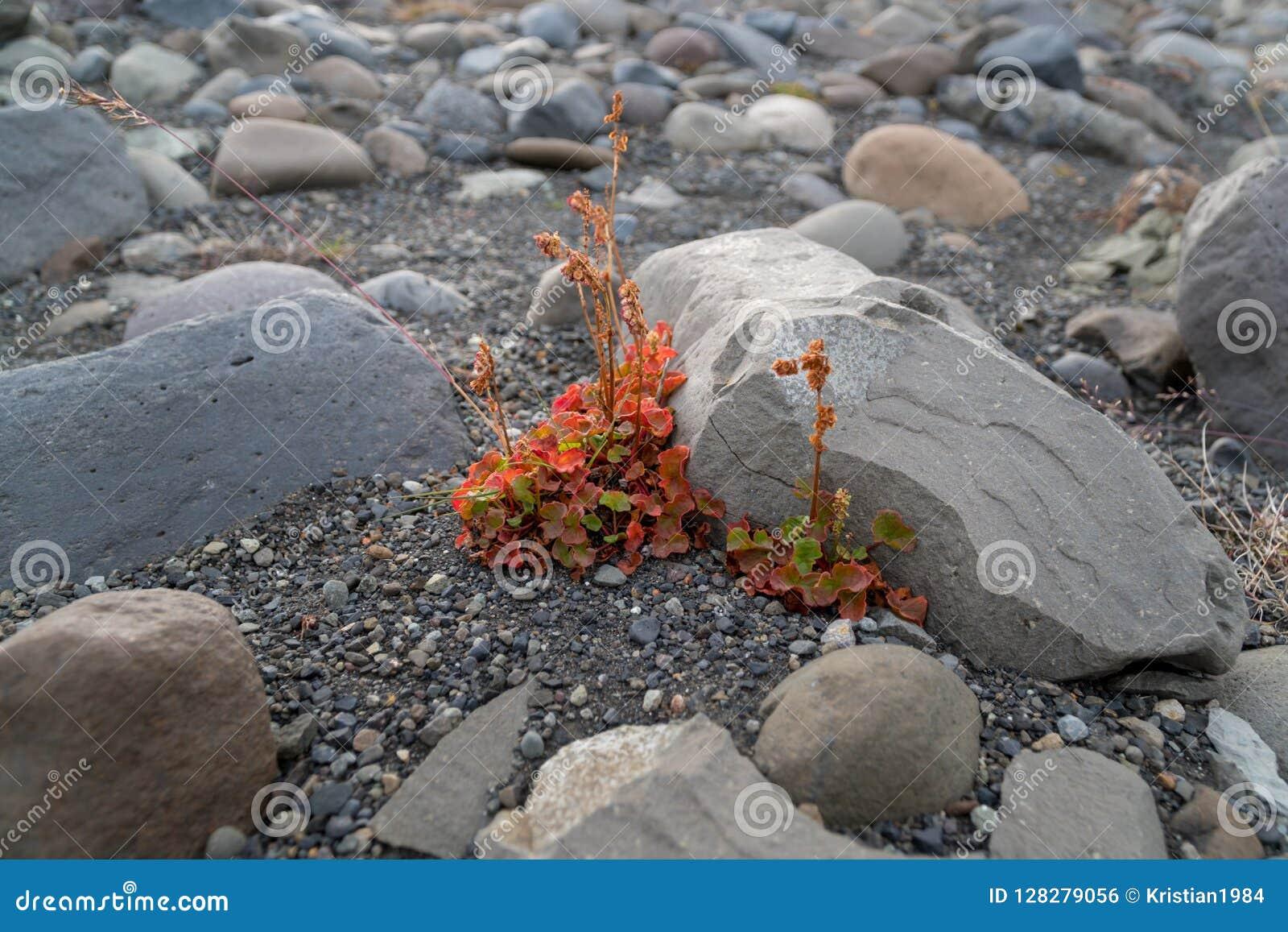 Малый красочный цветок растет на грубой поверхности