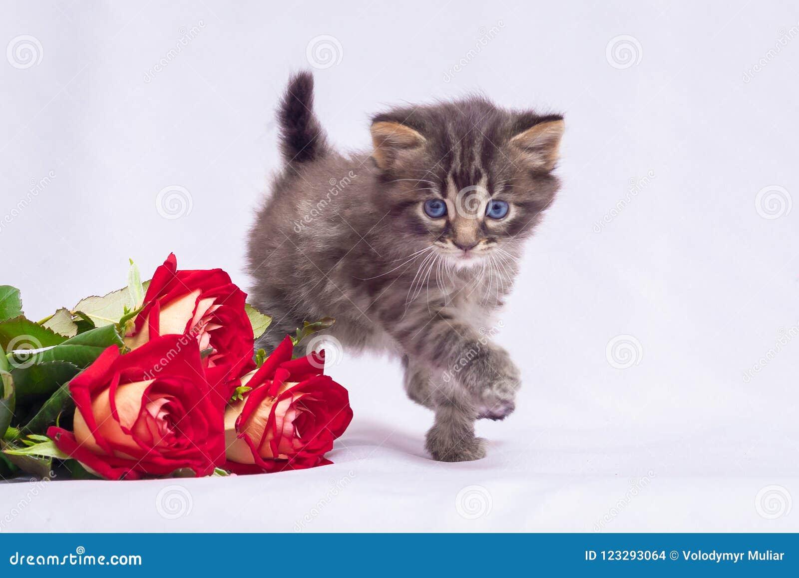 Поздравления подарок котенок фото 713
