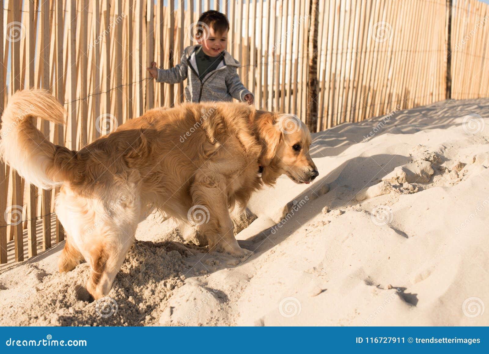 Малыш с собакой на пляже