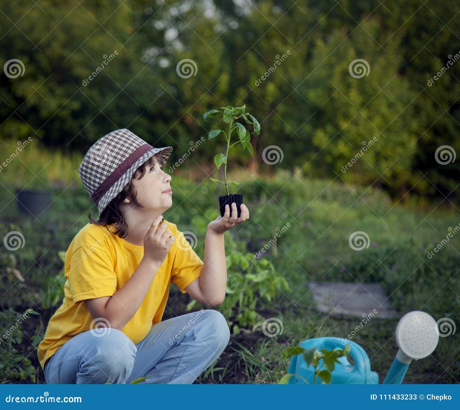 Мальчик в саде восхищает завод перед засаживать Зеленое Sprou