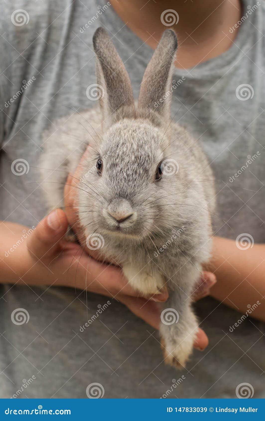 Мальчик в серой рубашке держа небольшого серого кролика