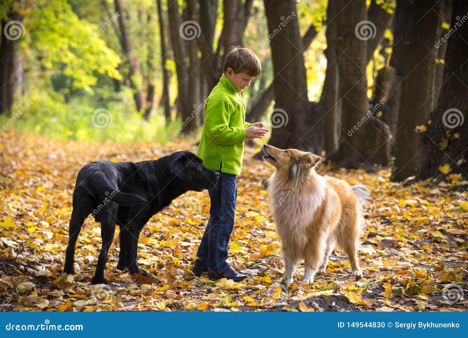Мальчик играя с 2 собаками на лесе осени