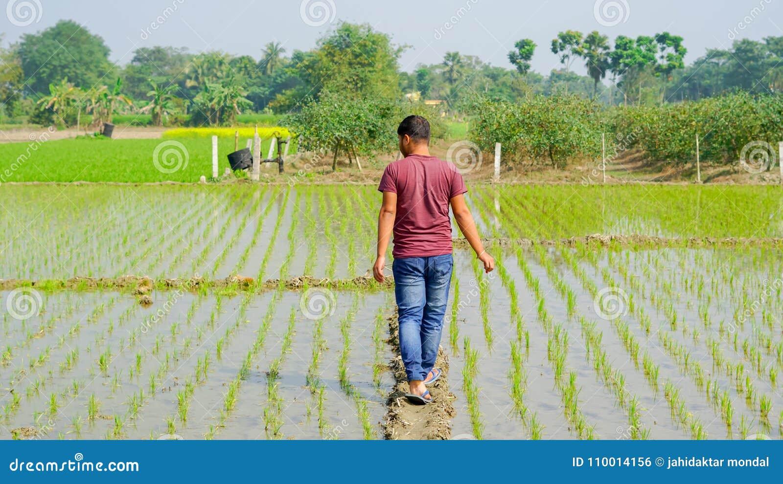 Мальчик идет между сельским хозяйством риса