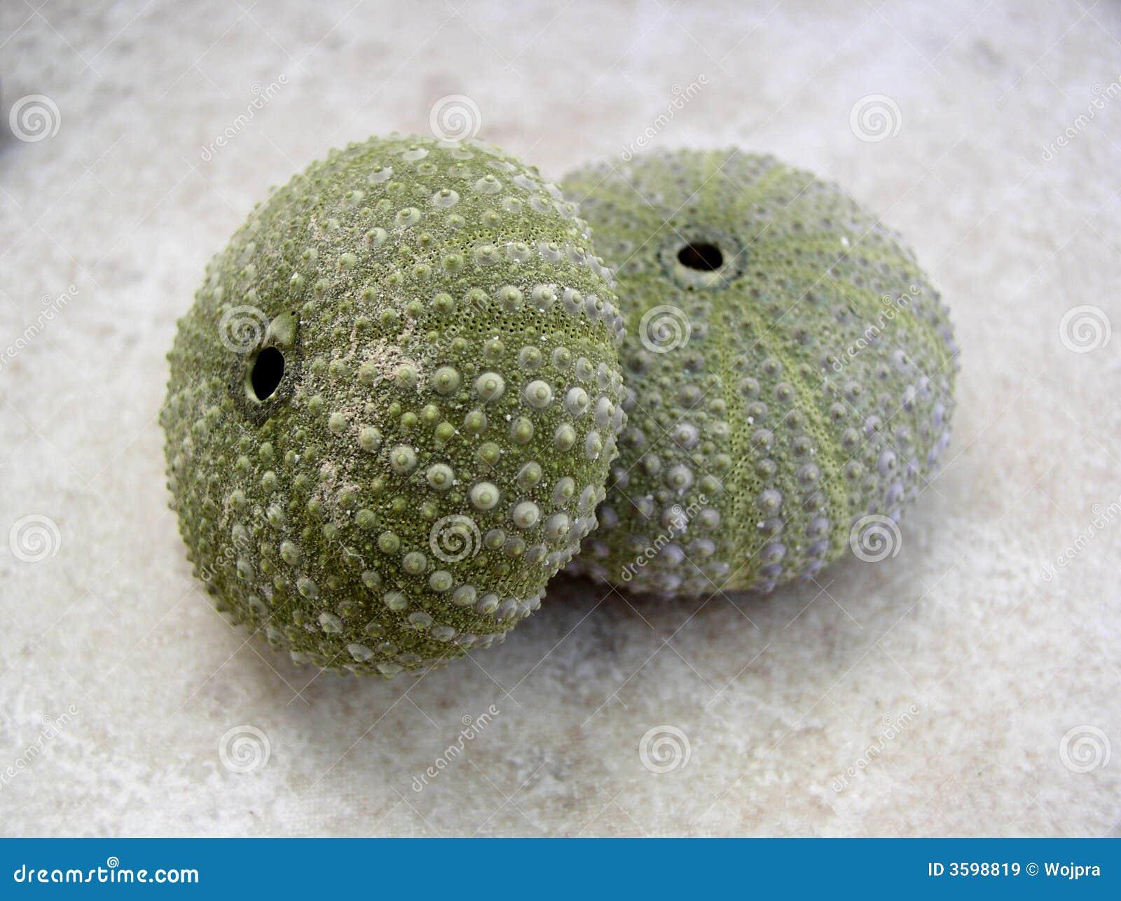 мальчишка seashells моря
