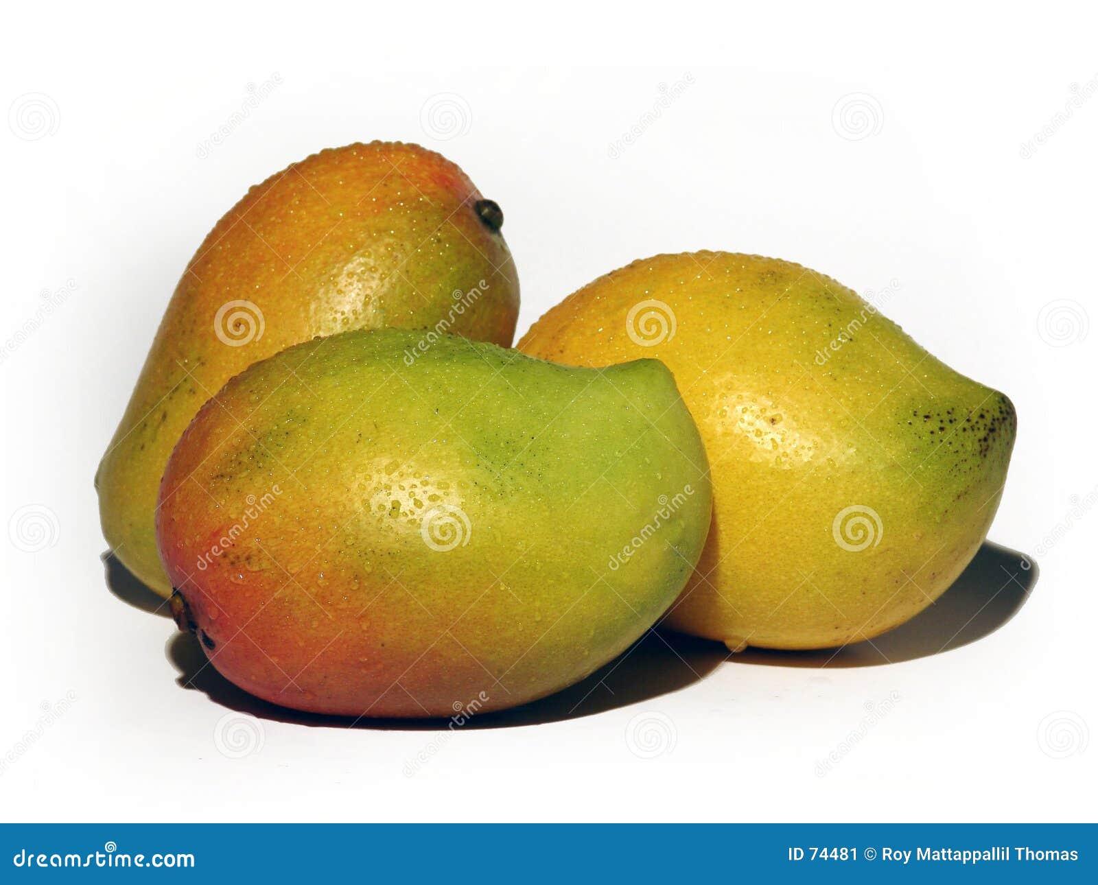 мангоы