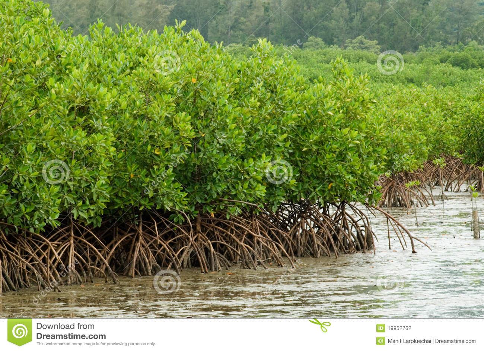мангрова 2 пущ
