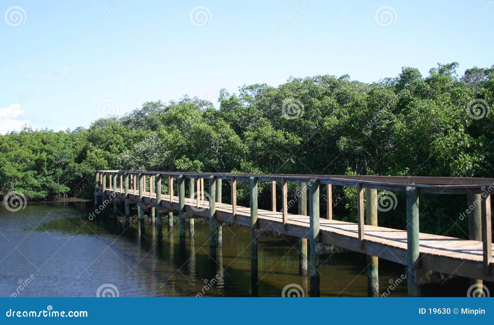 мангровы променада до конца