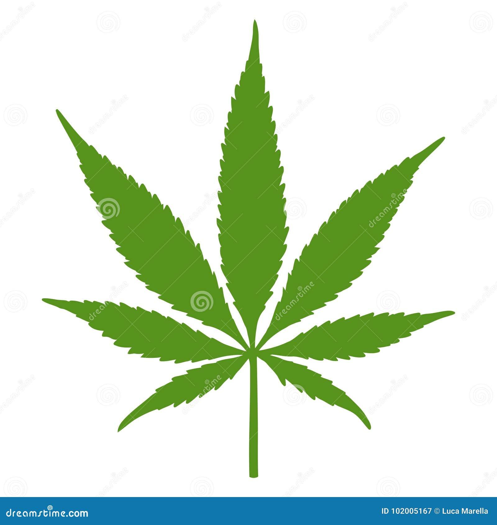 Лист конопли автоцветущие феминизированные сорта марихуаны