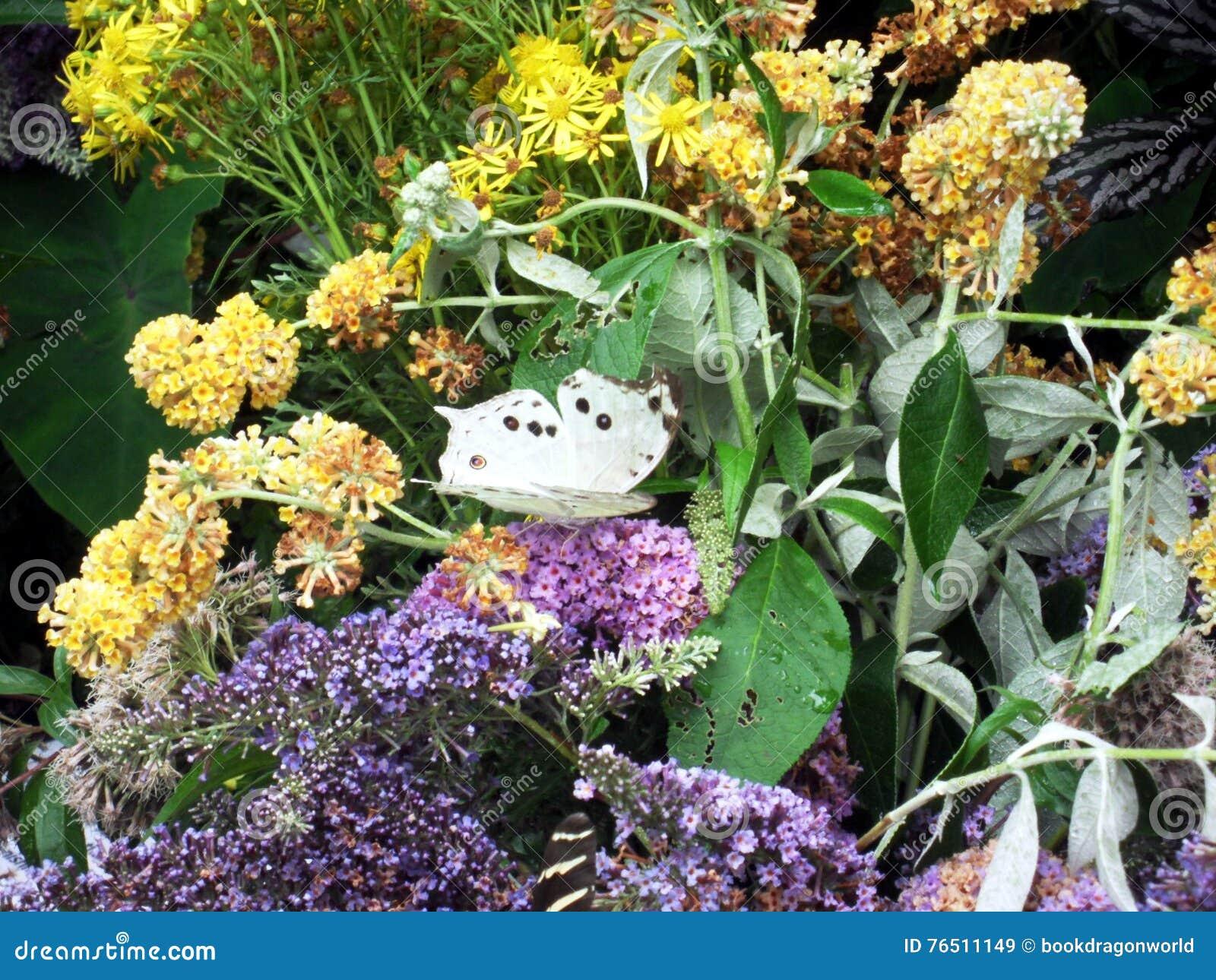 Мать жемчуга - тропической бабочки