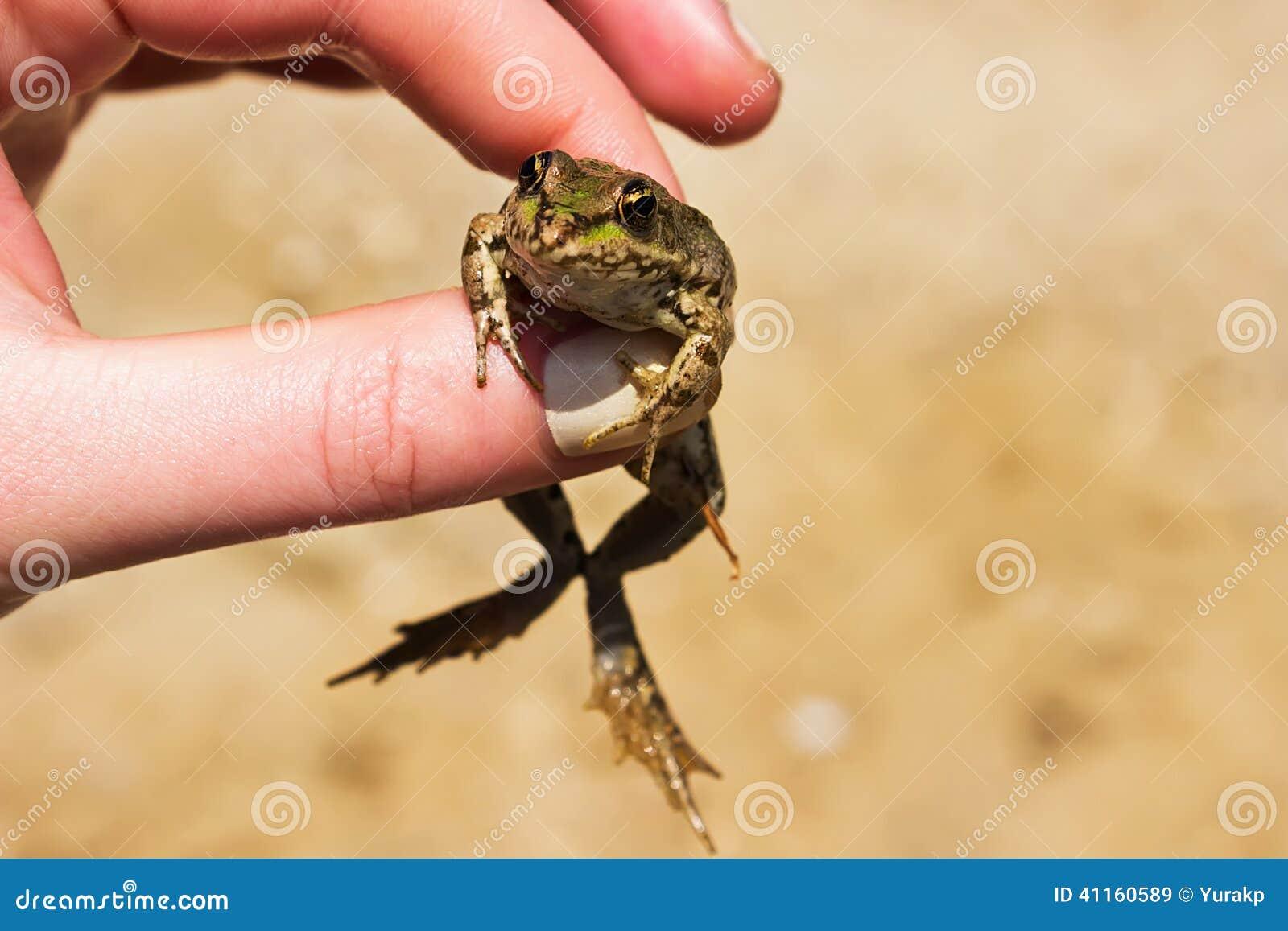 Маленькая лягушка в руке