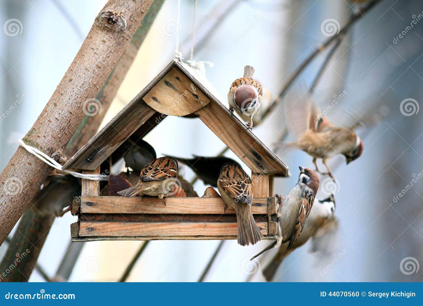 Маленький воробей в фидерах птицы