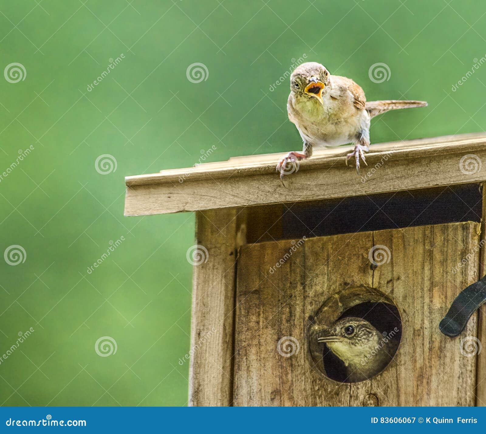 Маленький сюрприз птицы