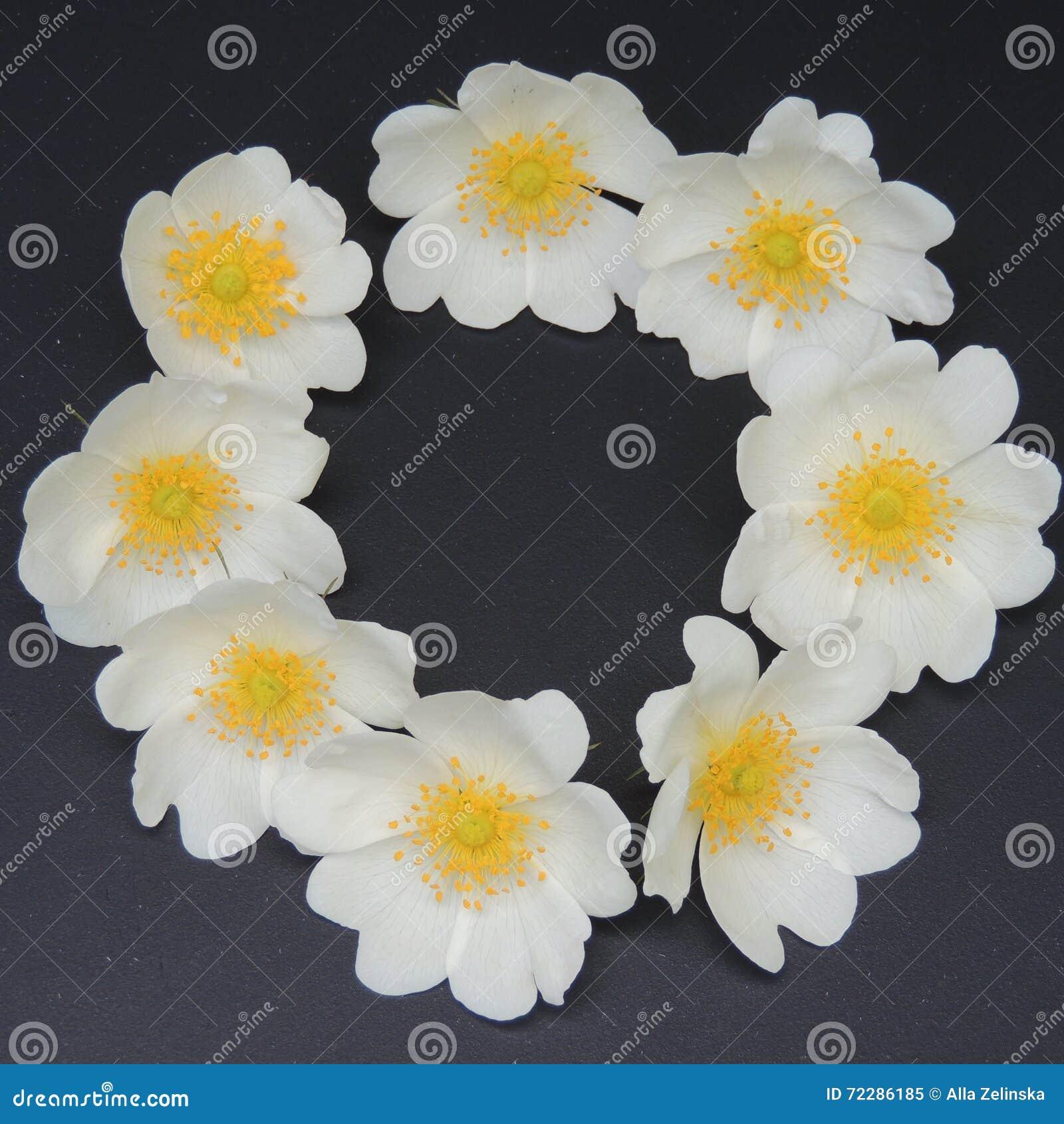 Download Малые белые цветки на черной предпосылке Стоковое Изображение - изображение насчитывающей backhoe, конец: 72286185