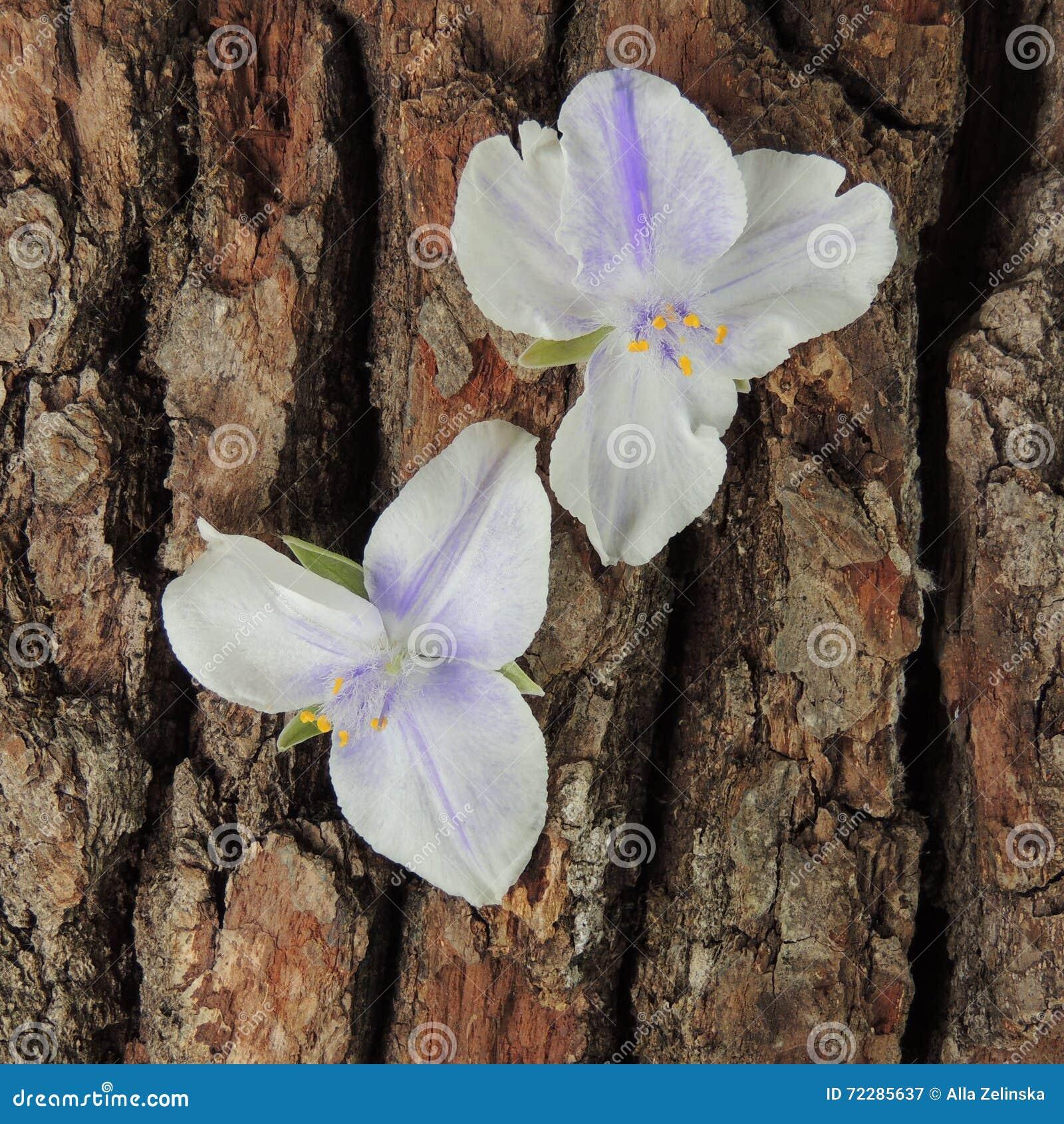 Download Малые голубые цветки на коре дерева Стоковое Изображение - изображение насчитывающей backhoe, ландшафт: 72285637