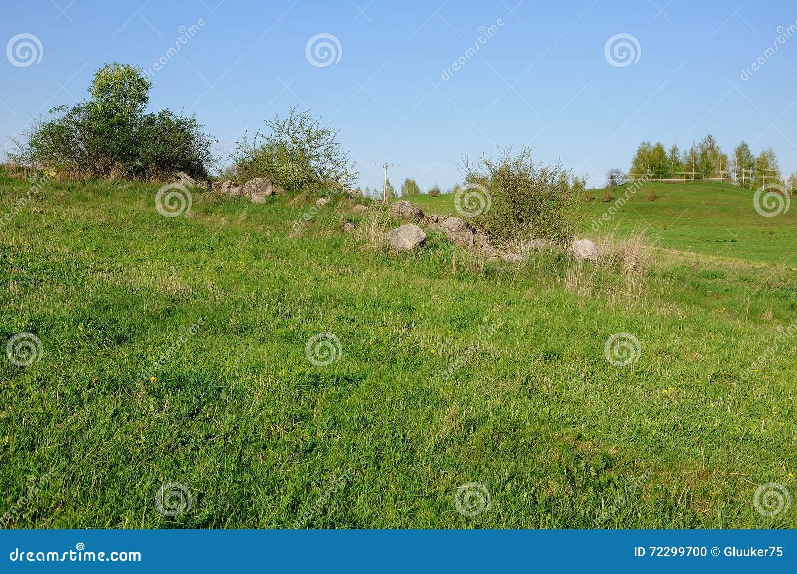 Download Малые деревья на камнях в зеленой траве Стоковое Фото - изображение насчитывающей green, ландшафт: 72299700