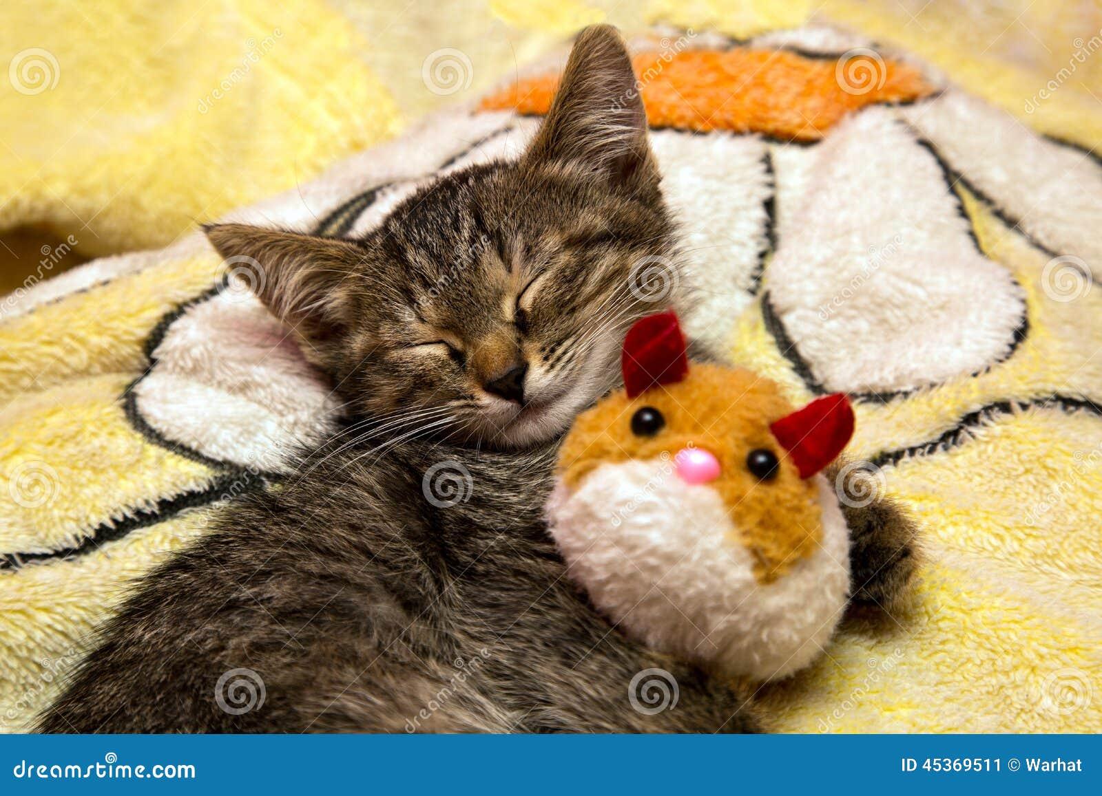 Малые милые сны котенка обнимая игрушку плюша