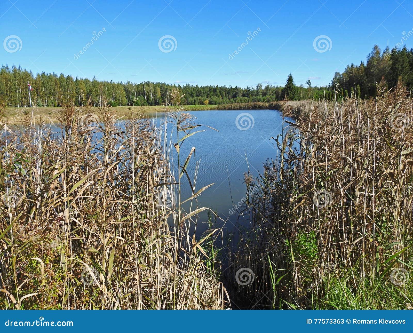 Малый голубой вид на озеро через тростники