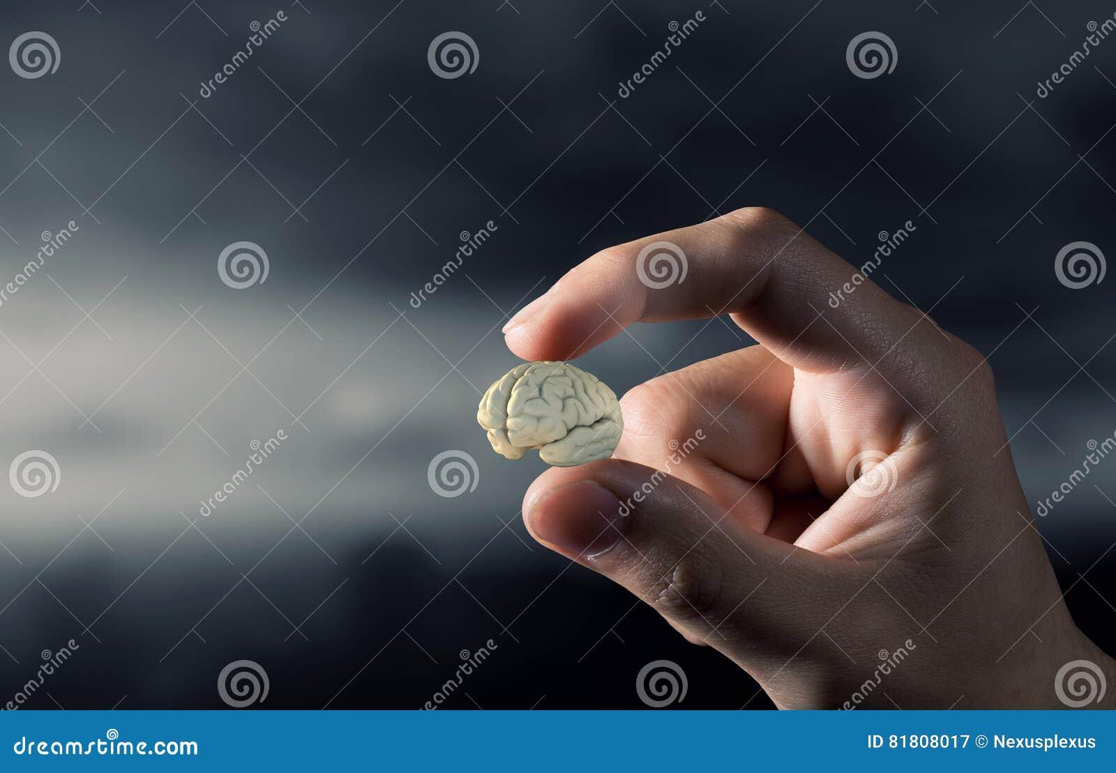 Малый мозг между пальцами Мультимедиа