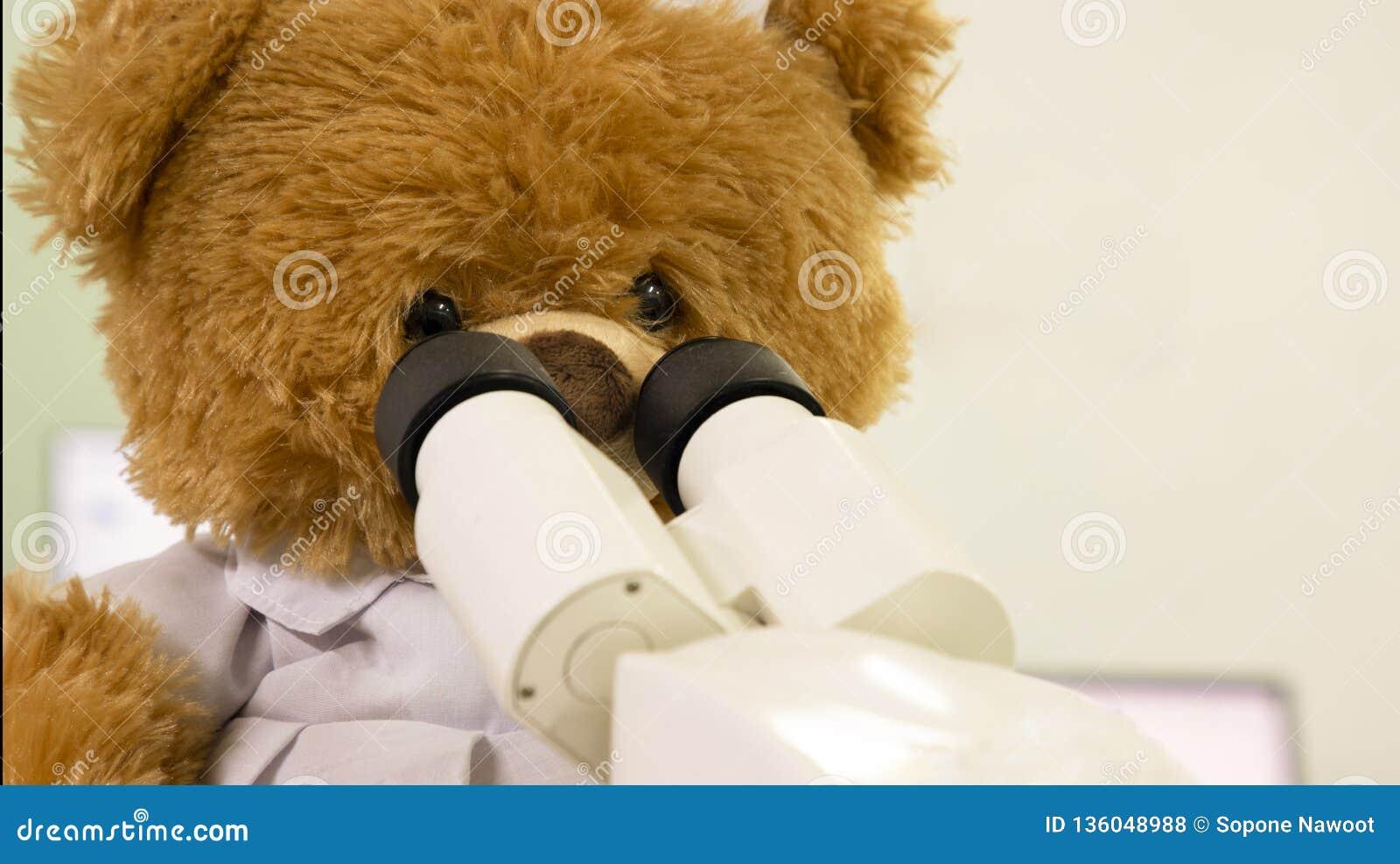 медведь игрушки смотря микроскоп