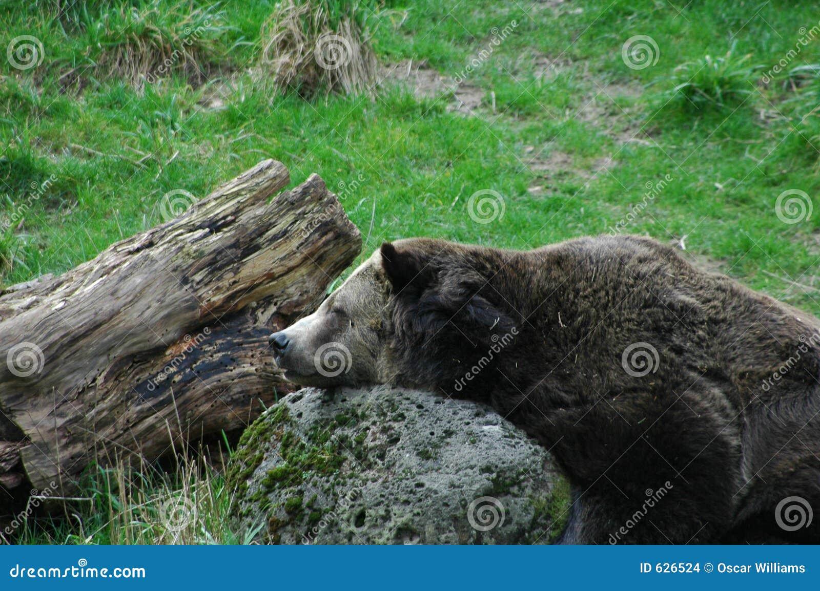 Download медведь стоковое фото. изображение насчитывающей одичало - 626524