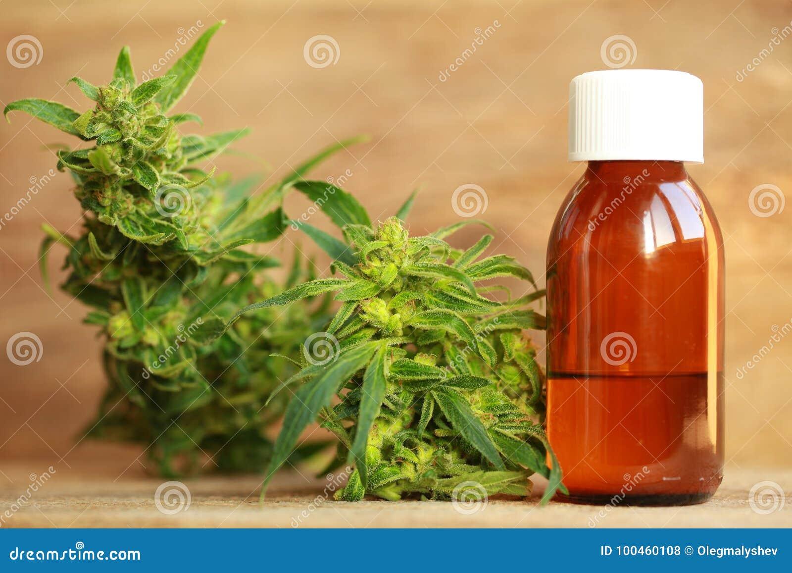 Медицинские выдержка масла конопли и завод пеньки