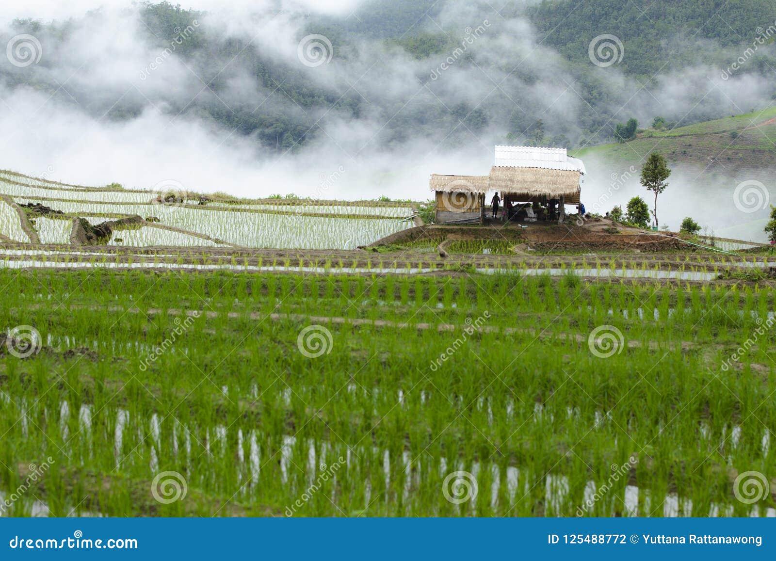 Мельница риса в середине долины