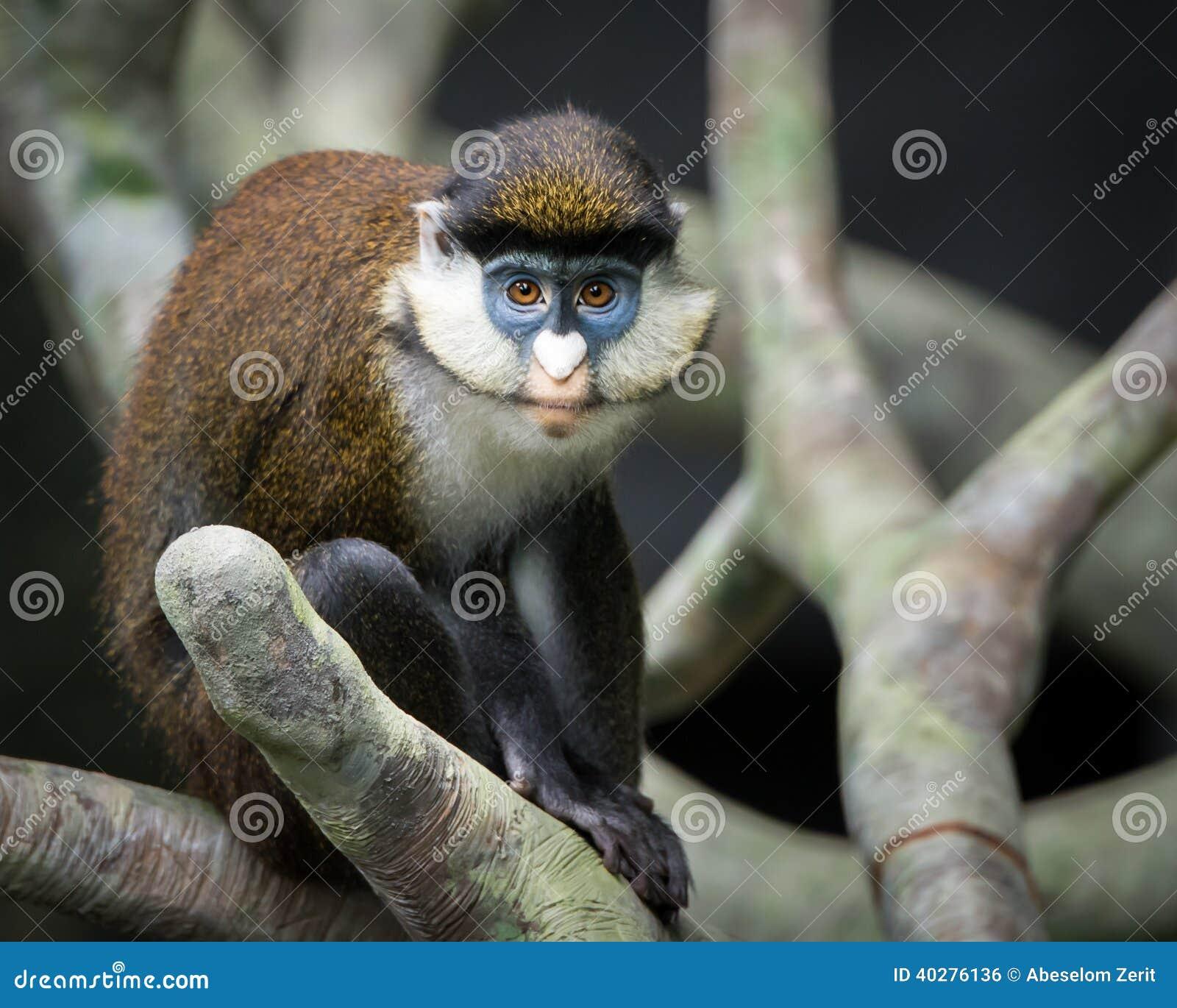 Меньшие Пятн-обнюхали обезьяну