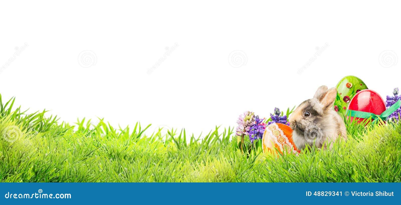 Меньший зайчик пасхи с яичками и цветками в траве сада на белой предпосылке, знамени
