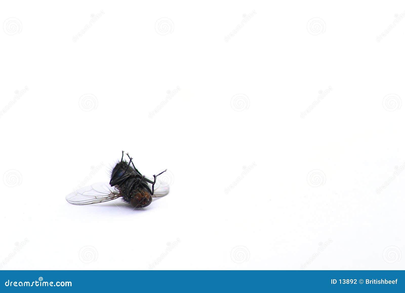 мертвая муха