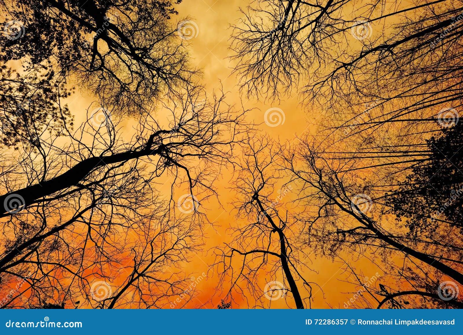 Download Мертвое дерево с солнечным светом Стоковое Изображение - изображение насчитывающей больш, старо: 72286357