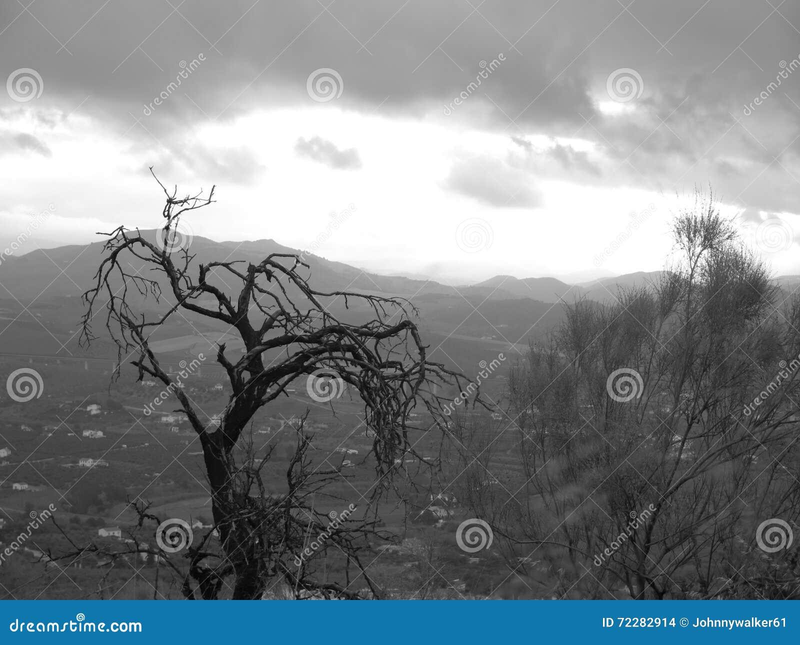 Download Мертвое миндальное дерево стоковое фото. изображение насчитывающей monochrome - 72282914
