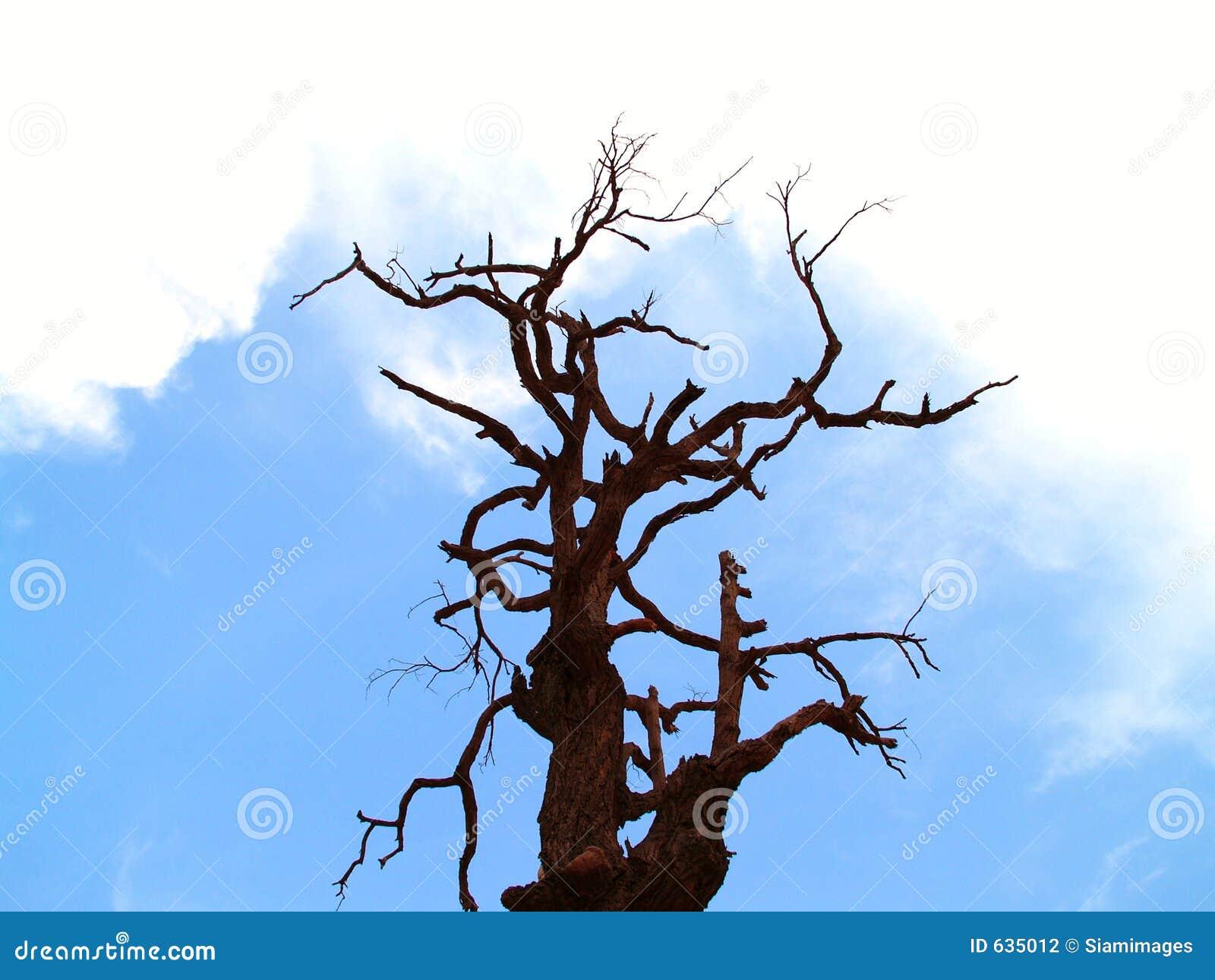 Download мертвый вал 10 стоковое фото. изображение насчитывающей небо - 635012