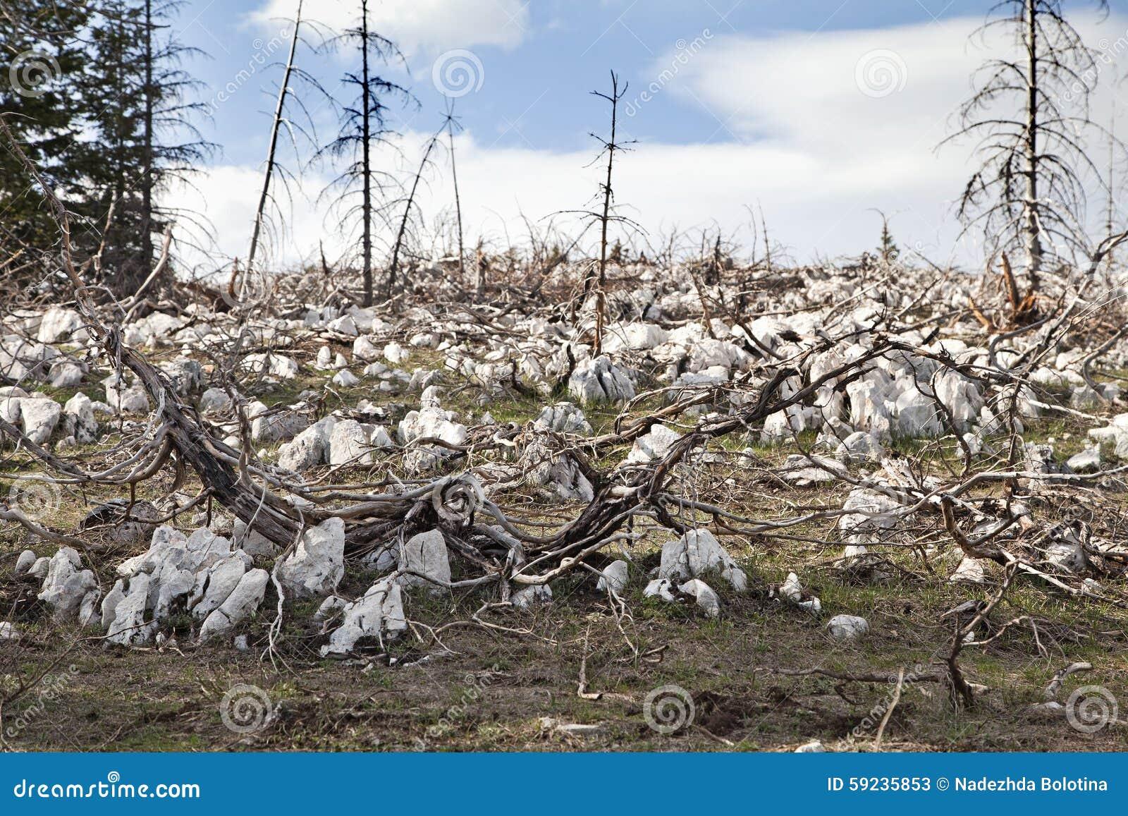 Мертвый лес в горах