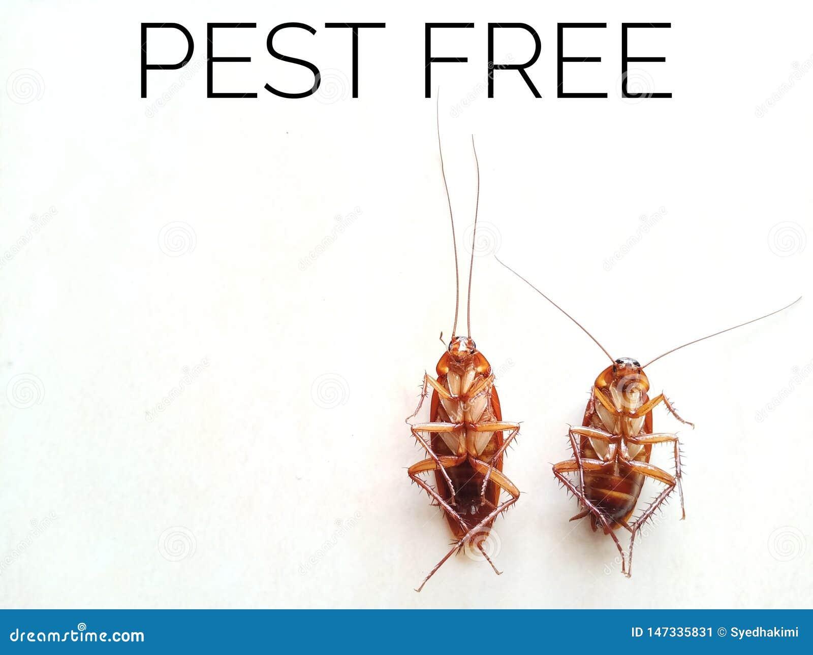 2 мертвых таракана изолированного на белой предпосылке с бичем цитаты свободно